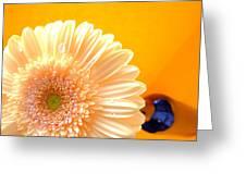 1535-001 Greeting Card