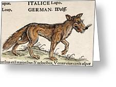 1560 Gesner European Wolf Canis Lupus Greeting Card