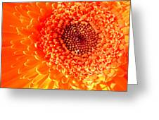 1571-001 Greeting Card