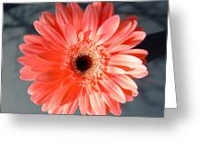 1577-002 Greeting Card