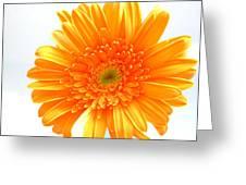 1609-001 Greeting Card