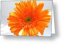 1609 Greeting Card