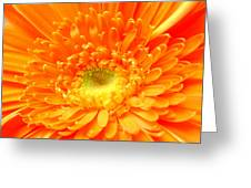 1626-001 Greeting Card