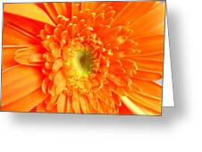 1628-001 Greeting Card