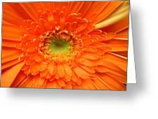 1630 Greeting Card