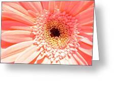 1673-001 Greeting Card