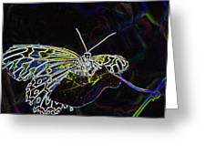 Colorful Butterfly Greeting Card