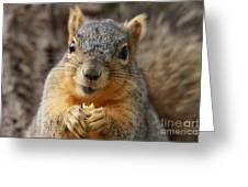 Squirrel Greeting Card