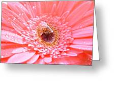 1733-001 Greeting Card