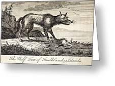 1778 Falkland Islands Wolf Fox Extinct Greeting Card