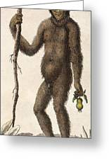 1795 Wild Man Of The Woods - Orangutan. Greeting Card
