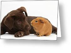 Puppy And Guinea Pig Greeting Card by Mark Taylor