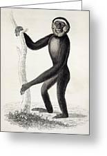 1833 Jardine Hylobates Hoolock Gibbon Greeting Card