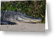 19- Alligator Greeting Card