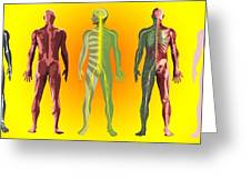 Human Anatomy ,artwork Greeting Card