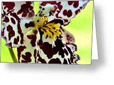 Orchid Flower Bloom Greeting Card