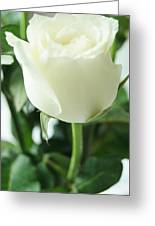 Rose For You Greeting Card