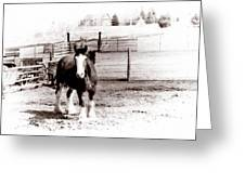 1900  Clydesdale Horse Greeting Card