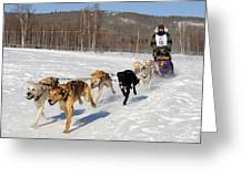 2010 Limited North American Sled Dog Race Greeting Card