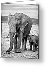 African Elephants In The Masai Mara Greeting Card