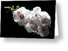 Apricot Flowers At Night Greeting Card