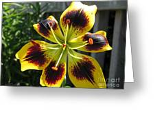 Asiatic Lily Named Black-eyed Cindy Greeting Card