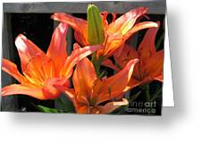 Asiatic Lily Named Gran Paradiso Greeting Card