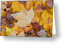 Autumn Leaves Greeting Card by Hans Engbers