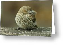 Baby House Finch Greeting Card
