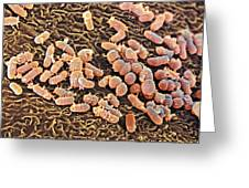 Bacteria In The Nose, Sem Greeting Card by Steve Gschmeissner
