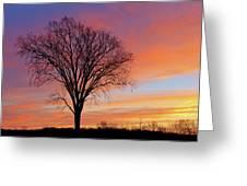 Bare Trees At Dawn Greeting Card