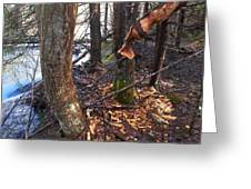 Beaver Marks Greeting Card