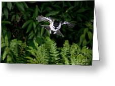 Black-capped Chickadee In Flight Greeting Card