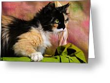 Calico Cat In Basket Greeting Card