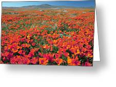 Californian Poppies (eschscholzia) Greeting Card