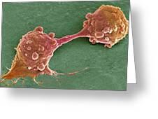 Cancer Cell Dividing, Sem Greeting Card