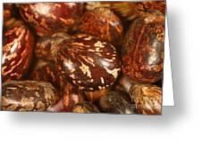 Castor Beans Greeting Card