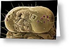 Caterpillar Head, Sem Greeting Card