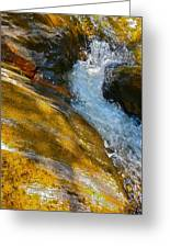 Childs Brook Close Up Greeting Card