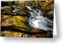 Childs Brook Shadows Greeting Card