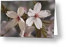 Close View Of Cherry Blossoms Greeting Card