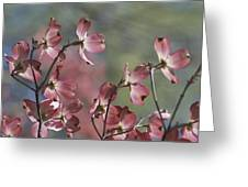 Close View Of Pink Dogwood Blossoms Greeting Card