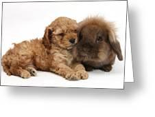 Cockerpoo Puppy And Rabbit Greeting Card
