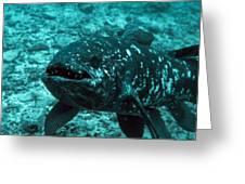 Coelacanth Fish Greeting Card