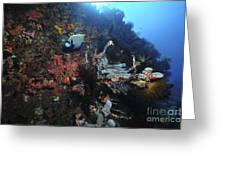 Colorful Reef Scene With Coral Greeting Card