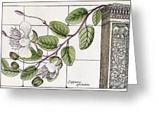 Colosseum: Flower Greeting Card