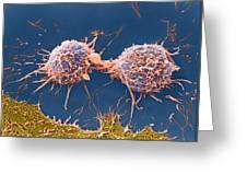 Coloured Sem Of Cervical Cancer Cells Dividing Greeting Card