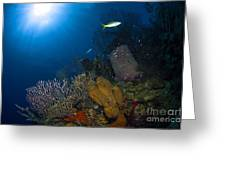 Coral And Sponge Reef, Belize Greeting Card