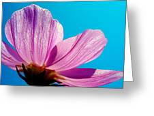 Cosmia Flower Greeting Card