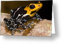 Crowned Poison Frog Greeting Card